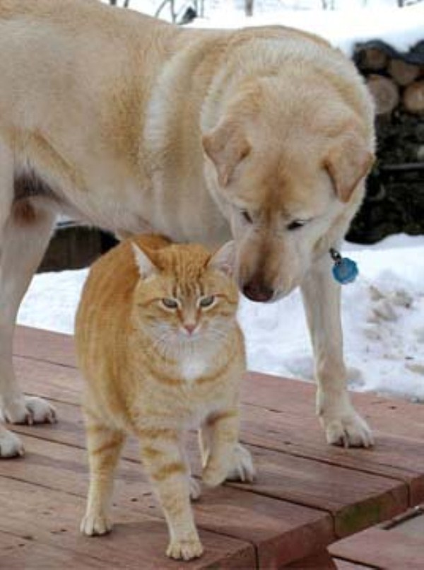 262 Unlikely Animal Friendships (30 photos)