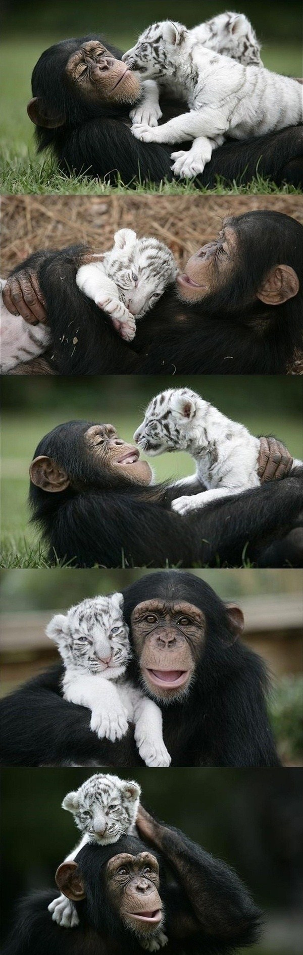 292 Unlikely Animal Friendships (30 photos)