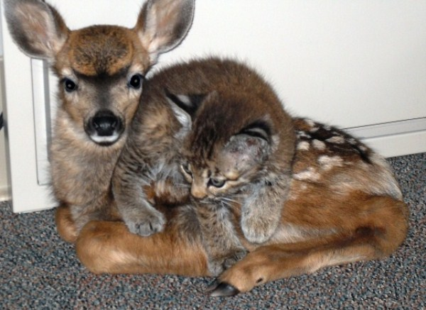 46 Unlikely Animal Friendships (30 photos)