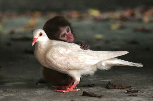 64 Unlikely Animal Friendships (30 photos)