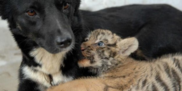 94 Unlikely Animal Friendships (30 photos)