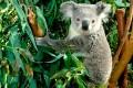 عکسهای بسیار زیبا و دیدنی از کشور استرالیا