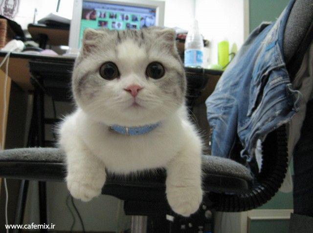 عکس های جالب گربه