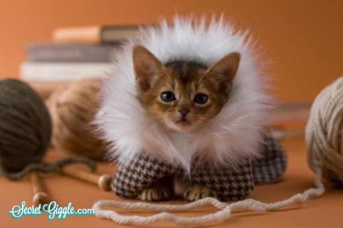 عکس گربه ناز