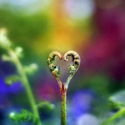 عکس عاشقانه با زمینه قلب