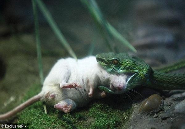 از خودگذشتگی جالب حیوانات