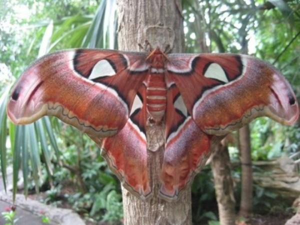 عکسهای جالب از حشرات و خزندگان غول پیکر