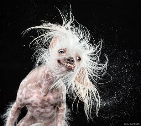 چهره دیدنی و بامزه سگ ها وقتی خیس می شوند
