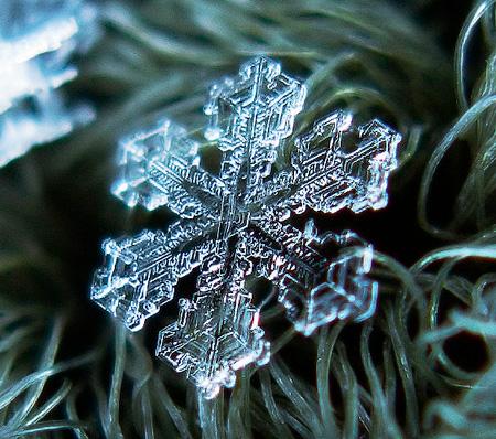 دانه برف