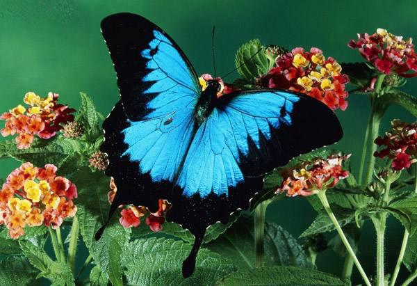 عکس پروانه