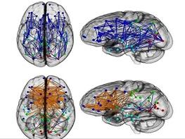 مغز مردان تک هسته و مغز زنان چند هسته ای است!