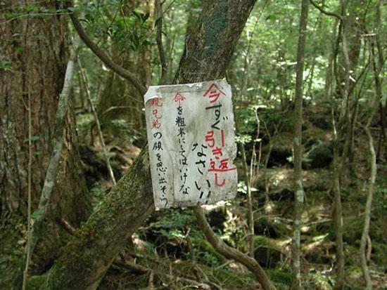 درختان خاموش، ژاپن