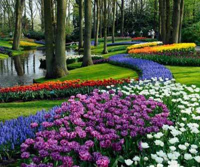 اخبار ,اخبار گوناگون,پارک کیوکنهوف در هلند
