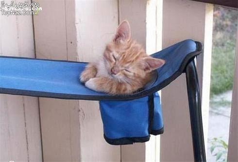 عکس های خنده دار از گربه های تبنل!