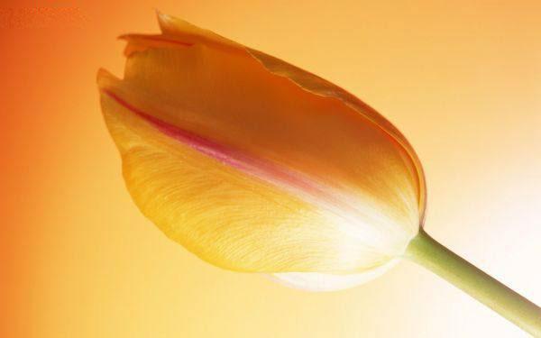 Flower 7 عکس زیباترین گل های جهان گل های انرژی بخش و گل عاشقانه زیبا عکس