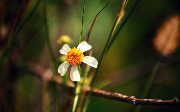 Flower 9 عکس زیباترین گل های جهان گل های انرژی بخش و گل عاشقانه زیبا عکس