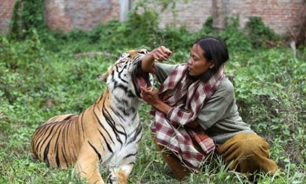 دوستی زن و ببر بنگال