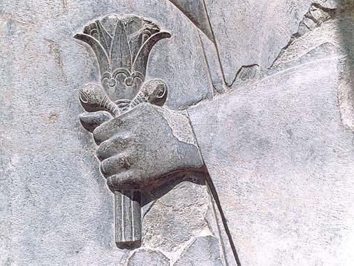 گل نیلوفر در دست سرباز هخامنشی