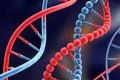 ترکیب ژن های انسان و حیوان چه خطراتی به همراه دارد؟