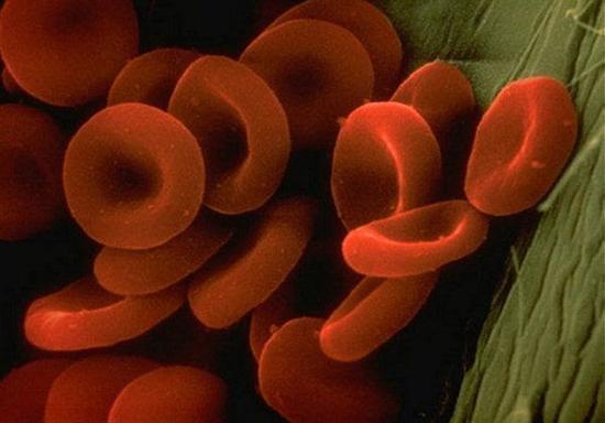 سلول های قرمز