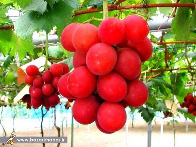 لوکس ترین میوها
