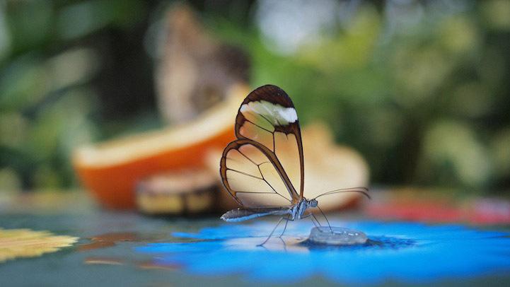 عکس های زیباترین موجود جهان