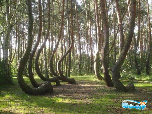 جنگل خمیده