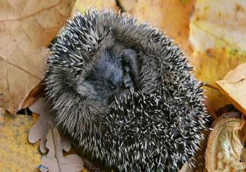نحوه گرم شدن حیوانات در زمستان,چگونگی گرم شدن جانوران در زمستان,دانستنیهای علمی