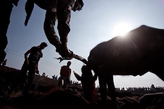 تصاویر جشنواره وحشیانه در نپال (18+)