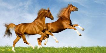 معمای معامله اسب