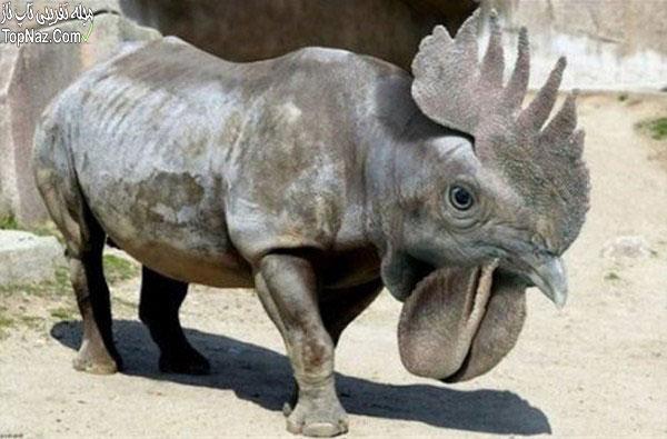 عکس خنده دار حیوانات