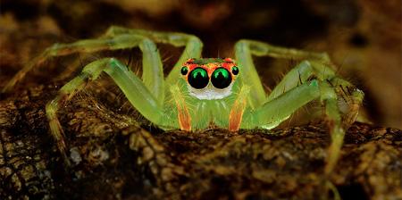 عکس های دیدنی از عنکبوت های زیبا
