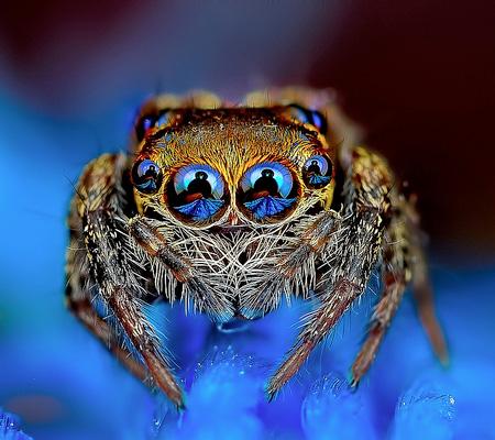 Macro Photos of Spiders