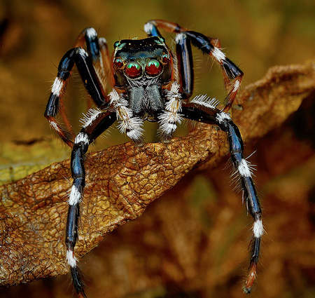 Photos of Spiders