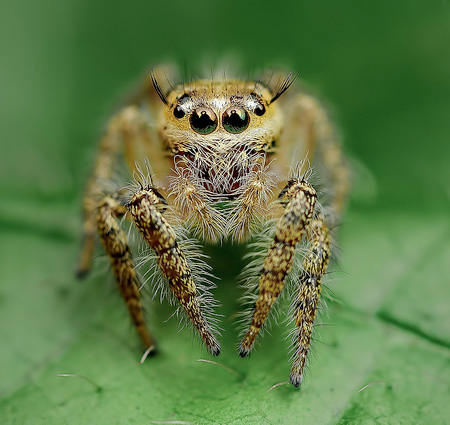 Beautiful Spiders