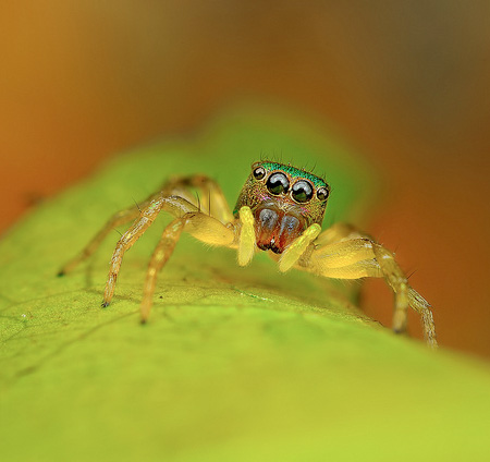 CloseUp Photos of Spiders