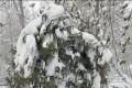 پیشبینی وضعیت هوا در روز طبیعت