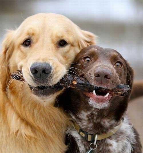 عکس خنده دار, عکس جالب, تصاویر بامزه