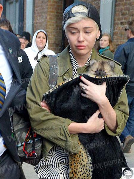 اخبار , اخبار فرهنگی,علت خواندن مایلی سایرس برای سگش,خوانندگان هالیوودی