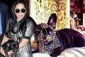 انتقاد از سگ لیدی گاگا با چند کیلو طلا و جواهرات! +عکس