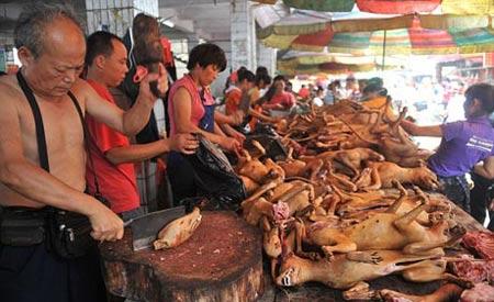 جشنواره چندش آورترین خوراکی ها در چین