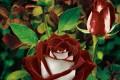 15 حقیقت خواندنی در مورد گل ها