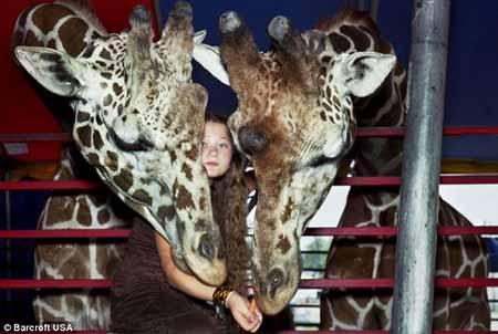 زندگی جالب این دختر با حیوانات وحشی