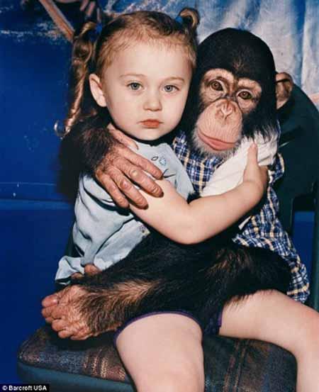 اخبار,اخبار گوناگون,زندگی با حیوانات وحشی