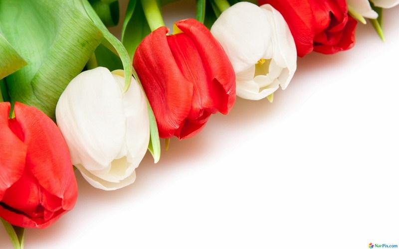 گل تقدیر و تشکر، بهارستان2 ، مدیریت آموزش و پرورش ناحیه 2 بهارستان ، کارشناسی تکنولوژی و گروههای آموزشی