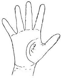 کف دست و خط زندگي, انواع کف بینی