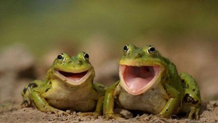 عکس خنده دار جدید, عکس نوشته های طنز
