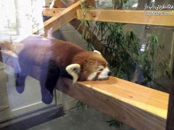 عکس خنده دار حیوانات, عکس های ناز و جالب