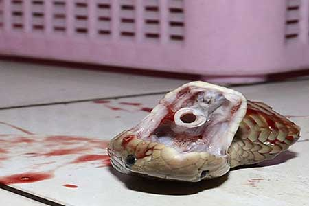 مار تکه تکه شده آشپز را نیش زد و کشت!