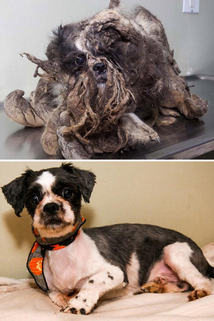 تغییری شگرف در زندگی سگهای بیخانمان